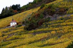 Thann er omgivet af stejle vinbjerge
