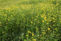 12.Vintergrønt Sandager