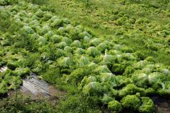 14.Frisk, fynsk frilandssalat