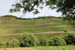Vinbjergene set fra Brauneberg over Mosel - Mange anser Moselland som det smukkeste område i Tyskland